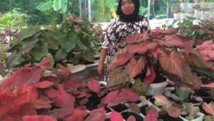 Komisioner Bawaslu Karimun Tiuridah Silitonga bersama bunga keladi, tanaman hias yang ia budidayakan dan menghasilkan pundi-pundi rupiah di rekeningnya.